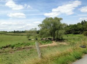 The beautiful PA countryside